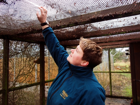 Vicky inspects some deterioration in the plastic roof mesh of the flight - we have decided to go for a finer, less degradable mesh.